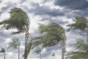Low-angle landscape view of heavy rain and storm winds blowing the tops of several palm trees.