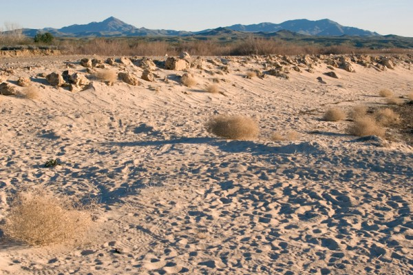 Dried riverbank or the Mojave River, Mojave Desert, California, USA Credit: Michael Beiriger/Alamy