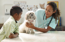 Careers: Veterinarian
